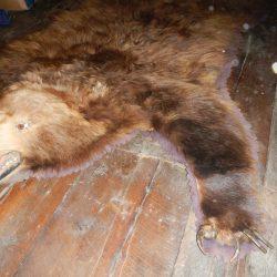 Bear Rugs